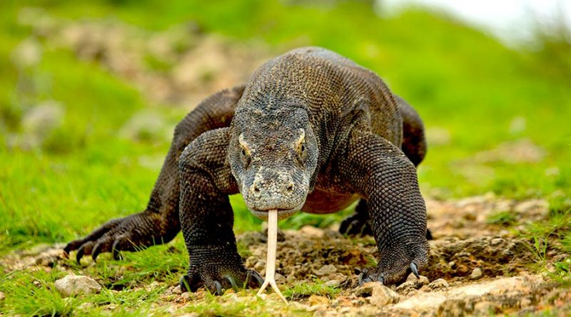 Flores & Komodo Tour 4 days 3 nights